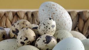 Keisti taškuoti kiaušiniai - putpelių kiaušinukai