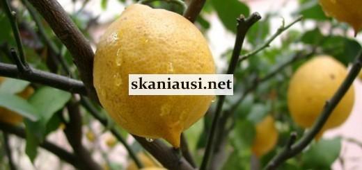citrina ir ne tik